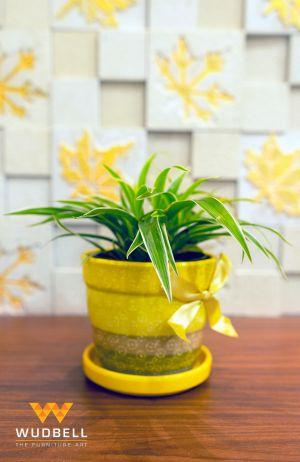 Indoor plant 2