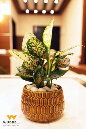 The Best Indoor Plant