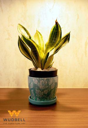 beautiful indoor plant