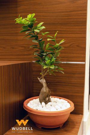 bonsai tree in shoe rack